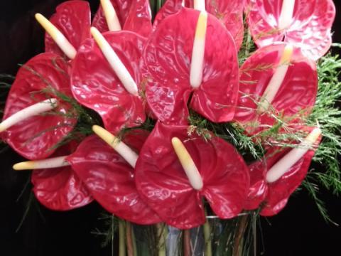 Assinaturas - Florença Eventos e Festas - Decoração para Casamento - Campinas - SP - 60