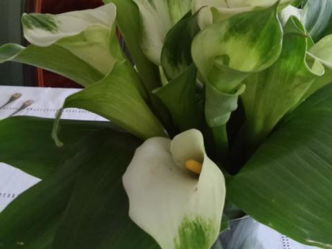 Assinaturas - Florença Eventos e Festas - Decoração para Casamento - Campinas - SP - 37