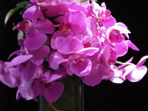 Assinaturas - Florença Eventos e Festas - Decoração para Casamento - Campinas - SP - 145
