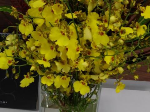 Assinaturas - Florença Eventos e Festas - Decoração para Casamento - Campinas - SP - 73