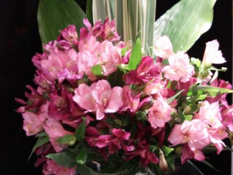 Assinaturas - Florença Eventos e Festas - Decoração para Casamento - Campinas - SP - 104
