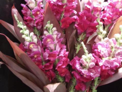 Assinaturas - Florença Eventos e Festas - Decoração para Casamento - Campinas - SP - 113